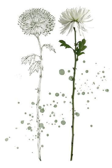 Botany Flower IV-Melissa Wang-Art Print
