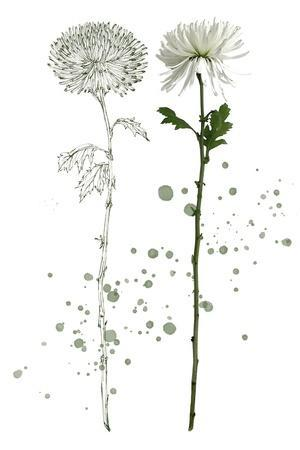 https://imgc.artprintimages.com/img/print/botany-flower-iv_u-l-q1apooo0.jpg?p=0