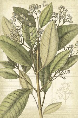 https://imgc.artprintimages.com/img/print/botany-sketchbook-ii_u-l-f886l40.jpg?p=0