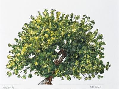 https://imgc.artprintimages.com/img/print/botany-trees-fabaceae-carob-tree-or-st-john-s-bread-ceratonia-siliqua_u-l-pv4vjf0.jpg?p=0