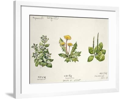 Botany--Framed Giclee Print