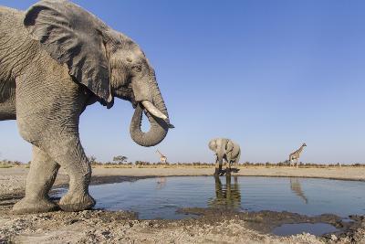 Botswana, Chobe National Park, Elephants and Giraffes at a Water Hole-Paul Souders-Photographic Print