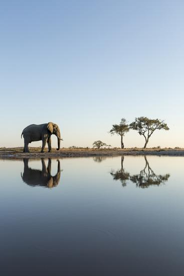 Botswana, Chobe NP, African Elephant at Water Hole in Savuti Marsh-Paul Souders-Photographic Print