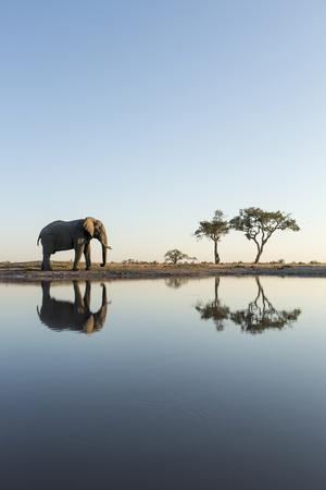 https://imgc.artprintimages.com/img/print/botswana-chobe-np-african-elephant-at-water-hole-in-savuti-marsh_u-l-pyopbt0.jpg?p=0