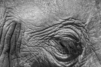 Botswana, Chobe NP, Eyeball of Elephant Standing Along Chobe River-Paul Souders-Photographic Print