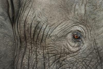https://imgc.artprintimages.com/img/print/botswana-moremi-game-reserve-african-elephant-in-okavango-delta_u-l-pyop540.jpg?p=0