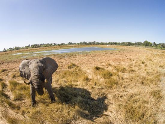 Botswana, Moremi Game Reserve, Elephant in Wetlands of Okavango Delta-Paul Souders-Photographic Print