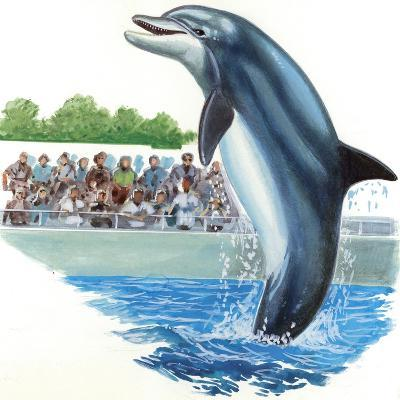 Bottlenose Dolphin or Bottle-Nosed Dolphin (Tursiops Truncatus) During Performance in Dolphinarium--Giclee Print