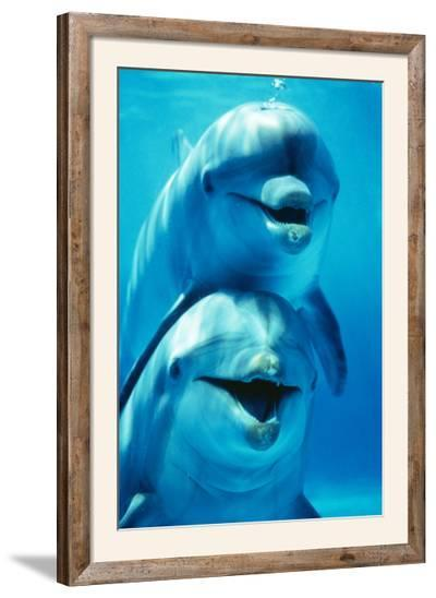 Bottlenose Dolphin Two, Facing, One on Top of the Other-Augusto Leandro Stanzani-Framed Photographic Print
