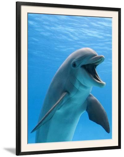 Bottlenose Dolphin Underwater-Augusto Leandro Stanzani-Framed Photographic Print