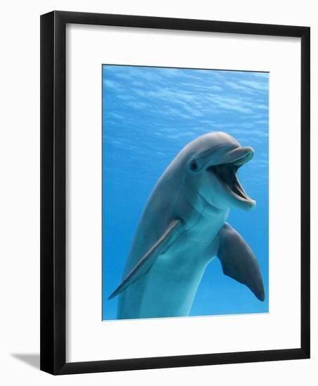 Bottlenose Dolphin Underwater-Augusto Leandro Stanzani-Framed Photographic Print