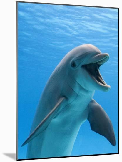 Bottlenose Dolphin Underwater-Augusto Leandro Stanzani-Mounted Photographic Print