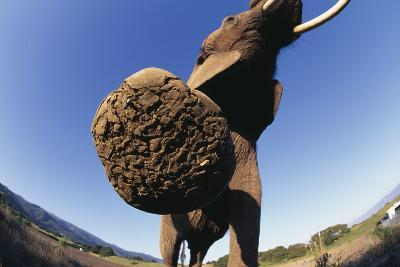 Bottom of Elephant's Foot-DLILLC-Photographic Print