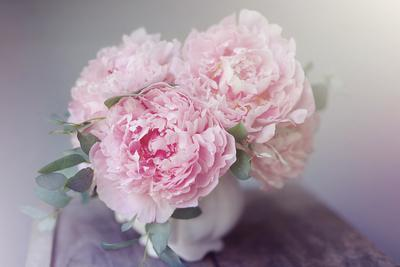 https://imgc.artprintimages.com/img/print/bouquet-of-blooms_u-l-q19t3p40.jpg?p=0
