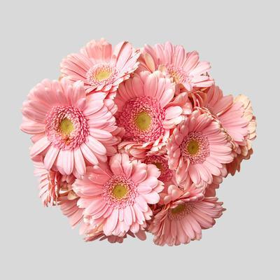 https://imgc.artprintimages.com/img/print/bouquet-of-pink-gerberas_u-l-q1bzjnv0.jpg?p=0