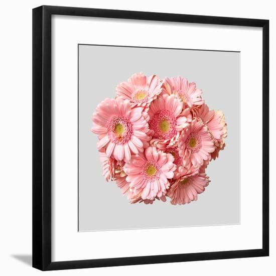 Bouquet of Pink Gerberas-artjazz-Framed Photographic Print