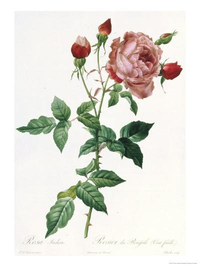 Bouquet of Rose, Anemone and Clematis-Pierre-Joseph Redout?-Giclee Print