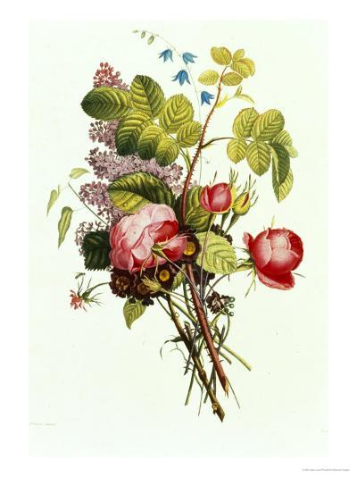 Bouquet of Rose, Lilac and Auricula-Jean Louis Prevost-Giclee Print