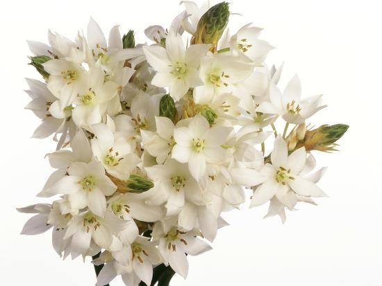 Bouquet of white flowers--Photographic Print