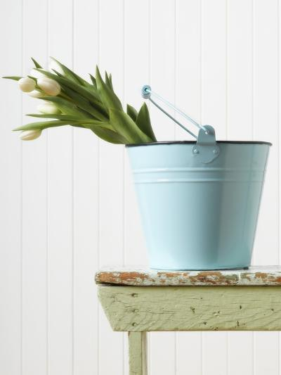 Bouquet of White Tulips in Bucket--Photographic Print
