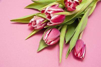 Bouquet, Tulips, Pink, Table-Sebastian Scheuerecker-Photographic Print