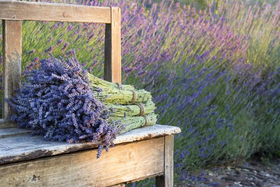Bouquets on Lavenders on a Wooden Old Bench-Anna-Mari West-Photographic Print