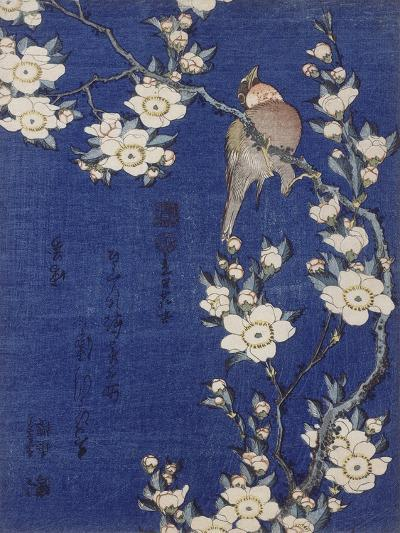 Bouvreuil et cerisier pleureur en fleur-Katsushika Hokusai-Giclee Print