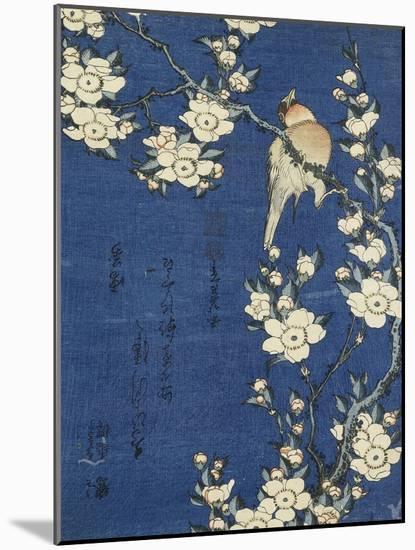 Bouvreuil et cerisier-pleureur-Katsushika Hokusai-Mounted Premium Giclee Print