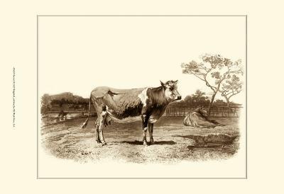 Bovine I-Emile Van Marck-Art Print