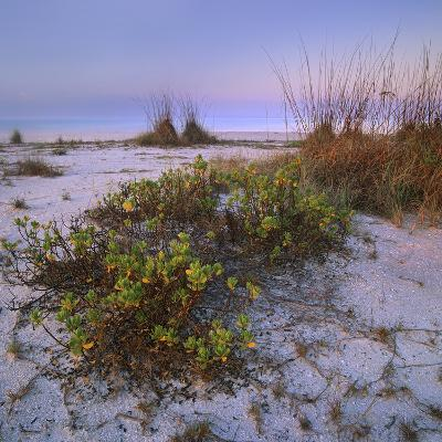 Bowman's Beach, Sanibel Island, Florida, Usa-Tim Fitzharris-Photographic Print