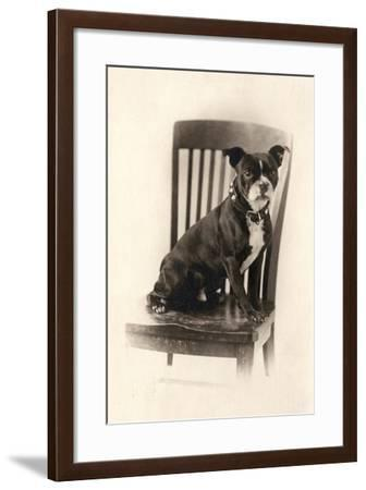 Boxer Sitting on a Chair, C.1890--Framed Giclee Print