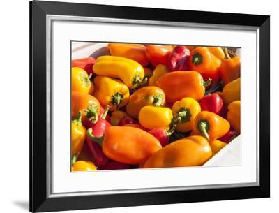 Boxes of Bell Peppers for Sale at a Produce Auction-Richard Nowitz-Framed Photographic Print