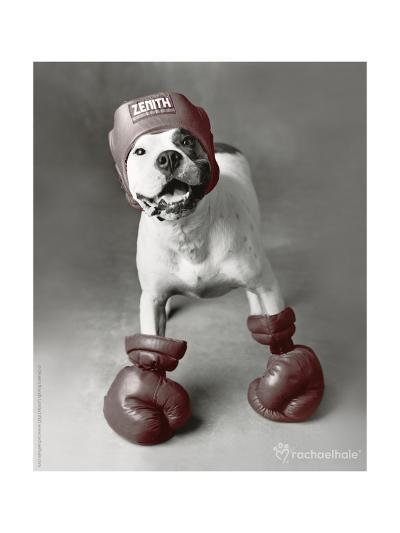 Boxing Dog-Rachael Hale-Photo