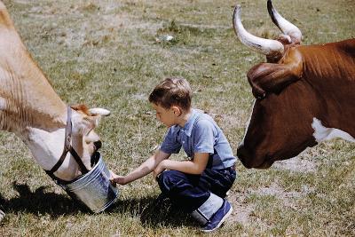 Boy Feeding Cows-William P^ Gottlieb-Photographic Print