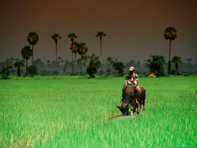 https://imgc.artprintimages.com/img/print/boy-on-buffalo-in-rice-field_u-l-p5xsgh0.jpg?p=0