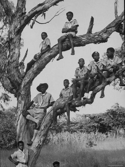 Boy Scout Troop Sitting in a Tree-Dmitri Kessel-Photographic Print