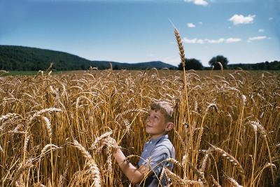 Boy Standing in Field of Wheat-William P^ Gottlieb-Photographic Print