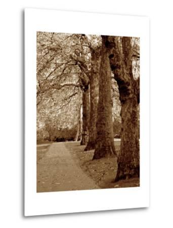 Autumn Stroll I