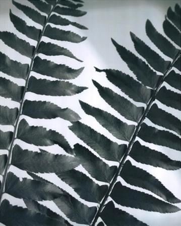 Fern Detail II