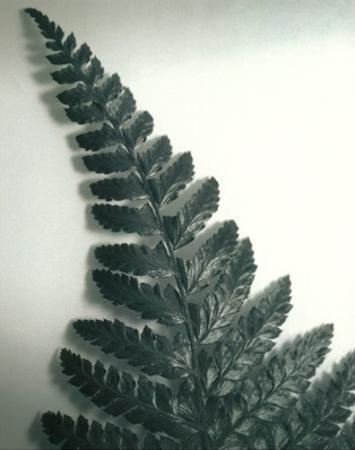 Fern Leaf I