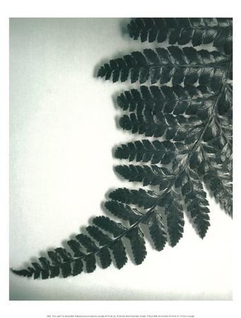 Fern Leaf II