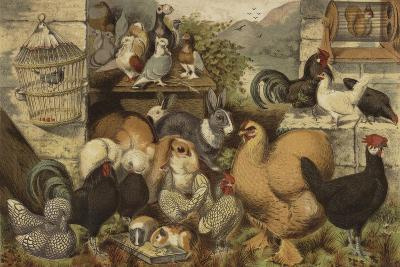 Boys' Pets--Giclee Print