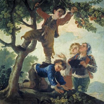 Boys Picking Fruit, 1779-80-Francisco de Goya-Giclee Print