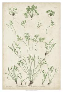 Bradbury Ferns I by Bradbury