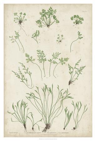 https://imgc.artprintimages.com/img/print/bradbury-ferns-i_u-l-f8hsl10.jpg?p=0