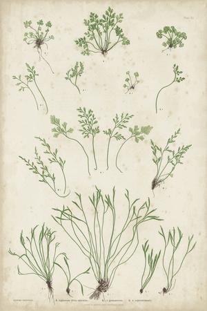https://imgc.artprintimages.com/img/print/bradbury-ferns-i_u-l-q11jvw60.jpg?p=0