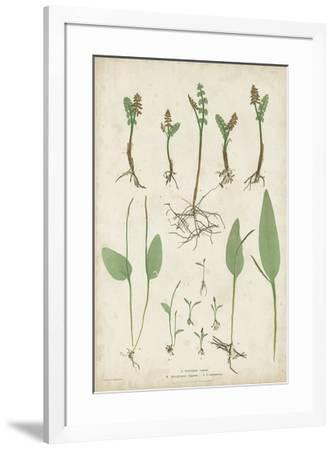 Bradbury Ferns II-Bradbury-Framed Giclee Print