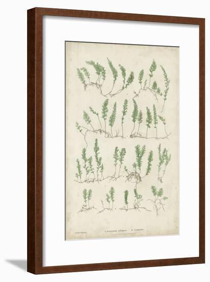Bradbury Ferns III-Bradbury-Framed Art Print