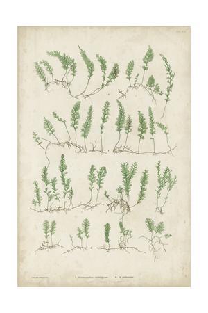 https://imgc.artprintimages.com/img/print/bradbury-ferns-iii_u-l-q11jvxo0.jpg?p=0