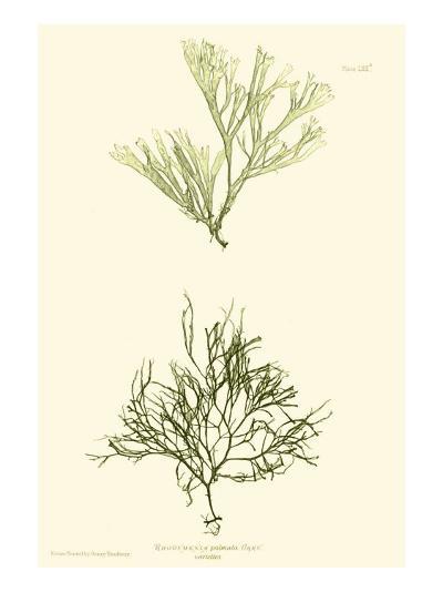 Bradbury Seaweed IV-Henry Bradbury-Art Print